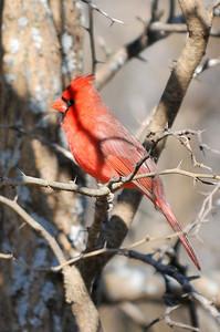 0812_Birds_063