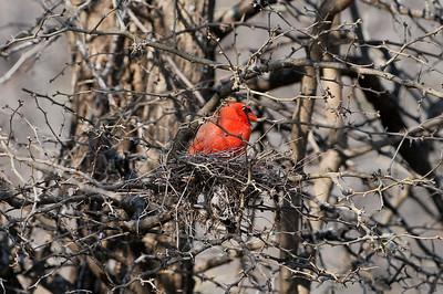 0812_Birds_019