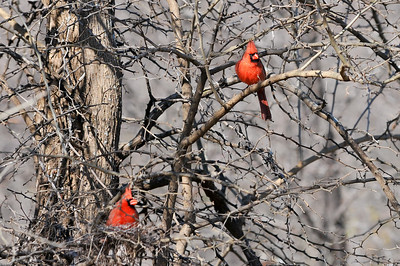 0812_Birds_017