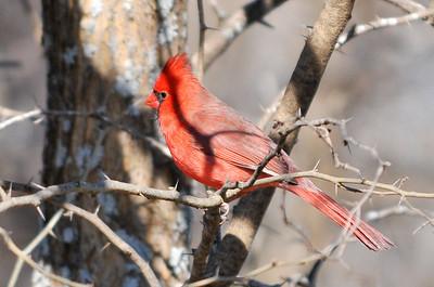 0812_Birds_057