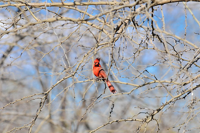 0812_Birds_046