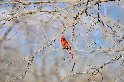 0812_Birds_048