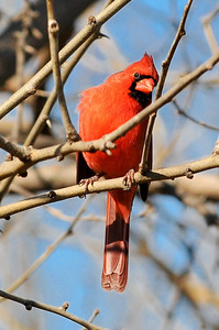 0812_Birds_036