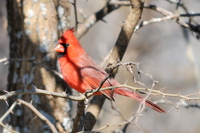 0812_Birds_062