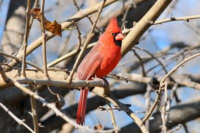 0812_Birds_031