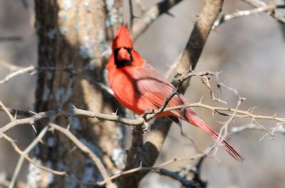 0812_Birds_060