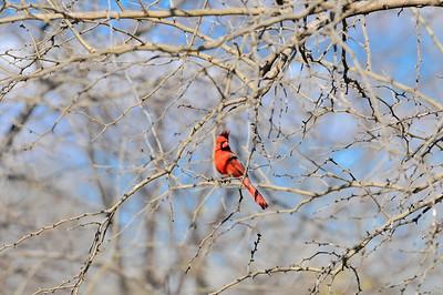 0812_Birds_044