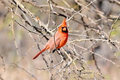 0812_Birds_014
