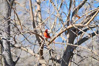 0812_Birds_054