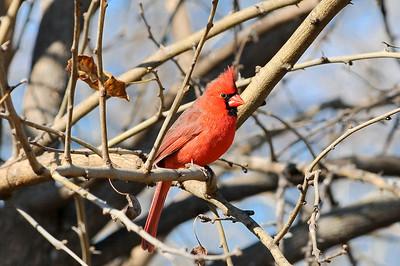 0812_Birds_022