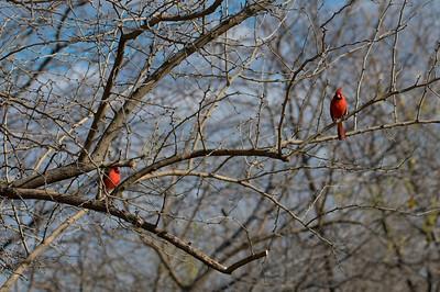 0812_Birds_004