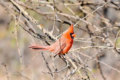 0812_Birds_012