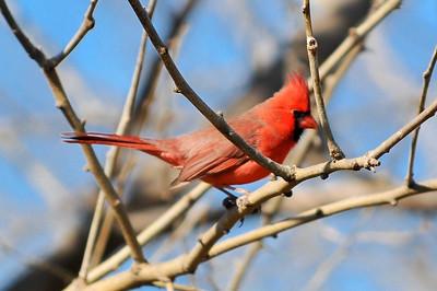 0812_Birds_065