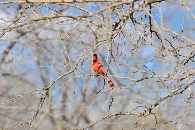 0812_Birds_045