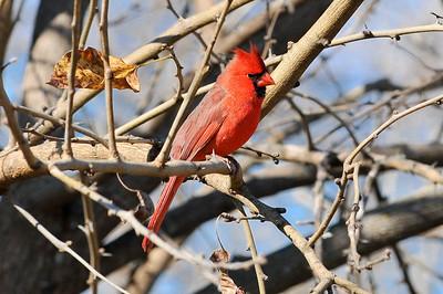 0812_Birds_028