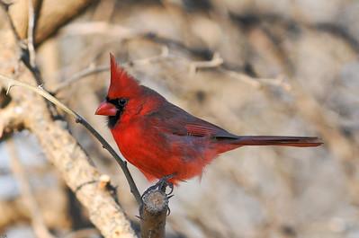 0812_Cardinals_079
