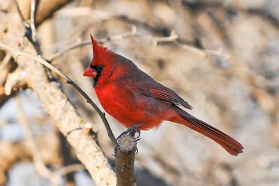 0812_Cardinals_080