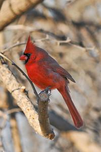 0812_Cardinals_082