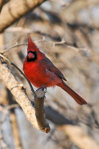 0812_Cardinals_078