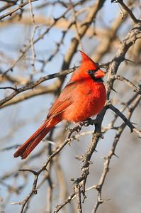 0812_Cardinals_088