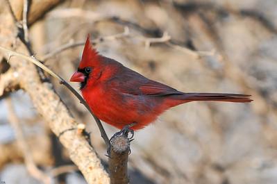 0812_Cardinals_083