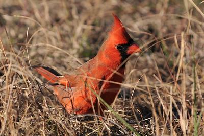 0812_Cardinals_086