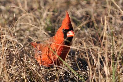 0812_Cardinals_085