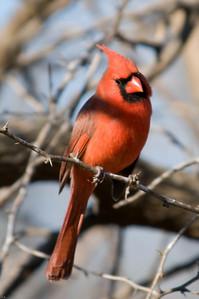 0812_Cardinals_054