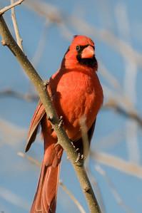 0812_Cardinals_020