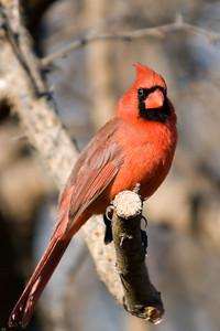 0812_Cardinals_043