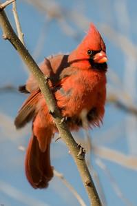 0812_Cardinals_022
