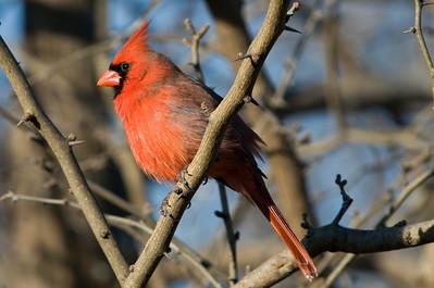 0812_Cardinals_107