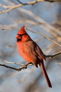 0812_Cardinals_136