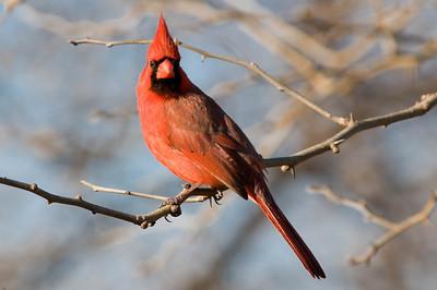 0812_Cardinals_131