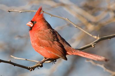 0812_Cardinals_132