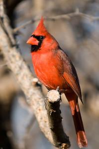 0812_Cardinals_047
