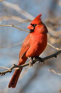 0812_Cardinals_142