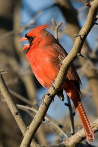 0812_Cardinals_100