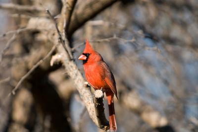 0812_Cardinals_048