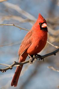 0812_Cardinals_141