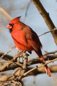 0812_Cardinals_116