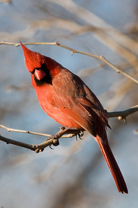 0812_Cardinals_130