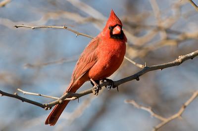 0812_Cardinals_139