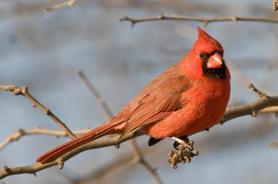 0812_Cardinals_126