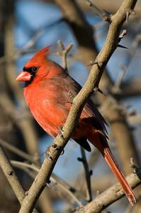 0812_Cardinals_084