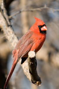 0812_Cardinals_042