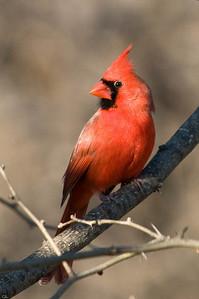 0812_Cardinals_149
