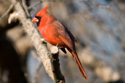 0812_Cardinals_045