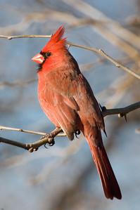 0812_Cardinals_134