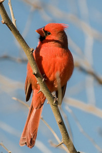 0812_Cardinals_024